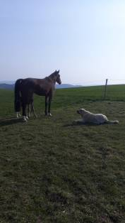 tolia et cheval